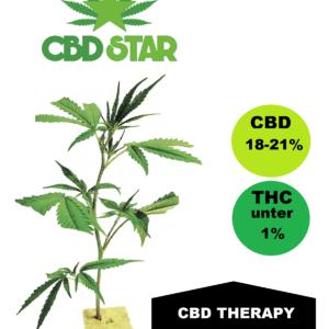 CBD Therapy